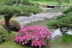 Image result for seattle japanese garden