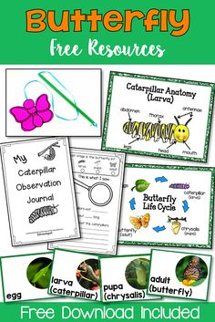 This free resource provides you with: & Observation Journal, 2 anchor posters, photo life cycle cards, butterfly craft and suggested activities with teacher tips. Science Lessons, Science Activities, Life Science, Sequencing Activities, Science Curriculum, Elementary Science, Science Classroom, Second Grade Science, Butterfly Life Cycle