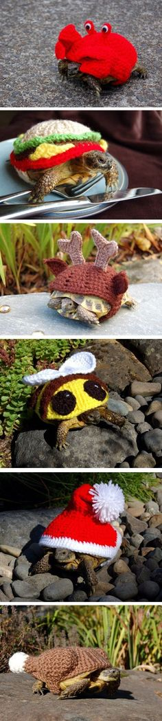 Funny pictures about Magnificent tortoise cozies. Oh, and cool pics about Magnificent tortoise cozies. Also, Magnificent tortoise cozies. Tortoise As Pets, Red Footed Tortoise, Tortoise Habitat, Sulcata Tortoise, Tortoise Care, Giant Tortoise, Tortoise Turtle, Turtle Clothes, Land Turtles