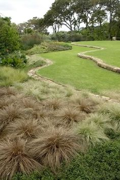 Never underestimate the beauty of grasses. Design by Franchesca Watson. For a wide selection of Australian and ornamental grasses as well as strappy leafed plants visit Bluedale's online store www.bluedaleplantsonline.com.au