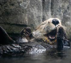 Big yawn..
