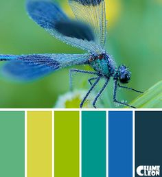 Color Palette, dragonfly, blue, green, yellow.