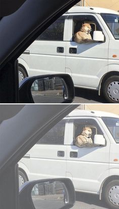 10 Times People Thought They Were Seeing Buff Animals, But They Were Optical Illusions 5 minutes Funny Animal Memes, Funny Animal Videos, Funny Animal Pictures, Funny Images, Funny Animals, Cute Animals, Wild Animals, Pet Anime, Anime Meme