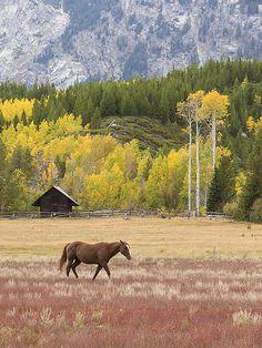 Fall colours at the corral at Taggart Lake Trailhead - Grand Teton National Park