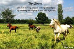 #Photographytips #movement #action #horses #animals #Tennessee