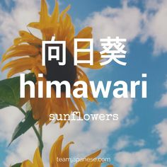 13 Words for a Perfect Japanese Summer himawari – Japanese for sunflower. Sunflowers are symbols of summer in Japan. For more essential Japanese summer words, head to Team Japanese! Beautiful Japanese Words, Learn Japanese Words, Study Japanese, Japanese Kanji, Japanese Names, Japanese Culture, Learning Japanese, Japanese Quotes, Japanese Phrases