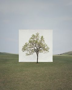 Myoung Ho Lee's Simply Beautiful Tree Portraits - My Modern Metropolis