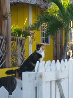 The kitty security guard at John's Escape.