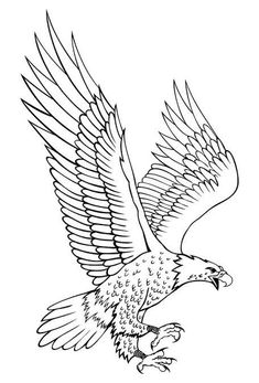Outline Drawings, Animal Drawings, Art Drawings, Eagle Outline, Ave Tattoo, Eagle Drawing, Leather Working Patterns, Pyrography Patterns, Bird Coloring Pages