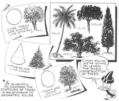 Try not to upset yourself with the huge amount of details that you see in a tree, but try to instead, break trees down into simpler shapes that you see....such as ovals, lines, and cylinders. After reading this article, you will feel a lot more confident in drawing trees.