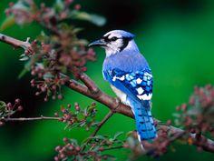 Download Wallpaper beautiful bird - 1600x1200