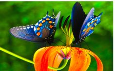 Most Beautiful Colorful Butterflies   Colorful butterfly nice hd wallpaper.