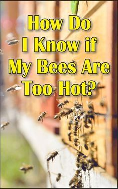"""Because I live in an area with long, hot summers I'm often asked, """"How do I know if my bees are too hot?"""" During the dog days of summer, you'll often find bees hanging out in clumps on the outside of their hive. Bee Hive Plans, Beekeeping For Beginners, How To Start Beekeeping, Bee Supplies, Raising Bees, Bee Do, Bee Boxes, Backyard Beekeeping, Bee Farm"""