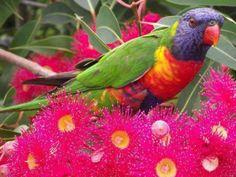 De beaux oiseaux - Ce que j'aime...
