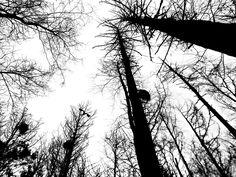 Selinas Ekologiska Meze. Birds in the woods.