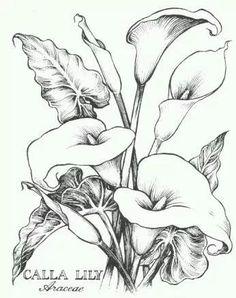Calla Lilies coloring for adults - kleuren voor volwassenen