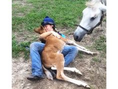 Baby Horse Makes Amazing Cuddle Buddy http://www.peoplepets.com/people/pets/article/0,,20917542,00.html