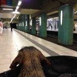 Flickas Tagebuch 2014-05-26: Hund sucht Anschluss