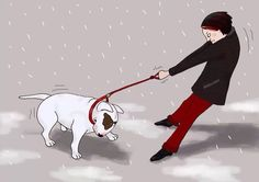 Walking a Bull Terrier #Bull #Terrier #Dog #Dogs #Terriers #Animals #Pets #Pups #Cute #Funny