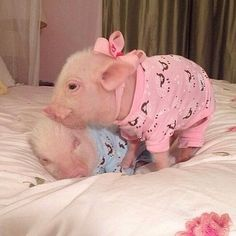 Mini pigs in pajama outfits Cute Baby Pigs, Baby Animals Super Cute, Cute Little Animals, Cute Funny Animals, Cute Dogs, Baby Animals Pictures, Cute Animal Pictures, Animals And Pets, Farm Animals