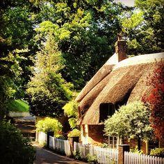 #dorset #dorchester #hangmans #cottage #thatch #trees #beautiful