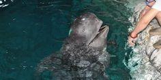 Liu Quansheng, Manager , Hangzhou Polar Ocean Park, China: Save the ...