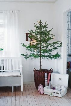 10 beautiful Christmas tree decorating ideas to celebrate the holidays in a minimal way (plus one of our all-time favorite tree stand alternatives. Minimalist Christmas Tree, Scandinavian Christmas Trees, Potted Christmas Trees, Beautiful Christmas Trees, Christmas Tree Decorations, Minimal Christmas, Winter Decorations, Potted Trees, Holiday Tree