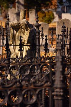 Rose Hill Cemetery - South Carolina