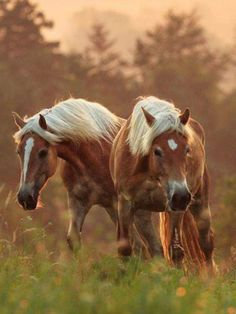 Together we are stronger 😙💫 All The Pretty Horses, Most Beautiful Horses, Horses And Dogs, Cute Horses, Horse Love, Beautiful Creatures, Animals Beautiful, Zebras, Haflinger Horse
