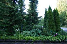 Singing in the rain - Vihreitä unelmia Singing In The Rain, Shade Garden, Garden Design, Lily, Shades, Plants, Ideas, Decor, Shutters