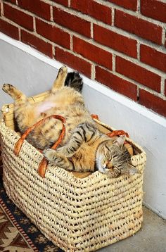 A basket full of cat....  -- [REPINNED by All Creatures Gift Shop] into my board, Upside Down Cats