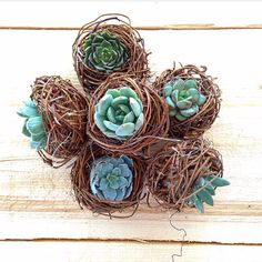 Succulent nests