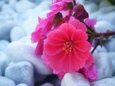 12987104_830253040440889_5349867483396391583_n Insta Like, Like4like, Rose, Amazing, Plants, Swag, Shots, Colorful, Smile