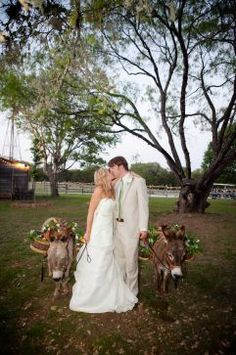 Miniature donkeys are a special perk at Old Glory Ranch.  Country nuptials are trending now: 9 Texas venues for cowgirl brides - Houston Chronicle