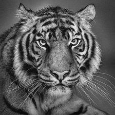 Drawing Animal karya Karandashom