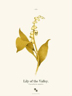 lily of the valley happens to be one of my favorite flowers, the fact that this is also epic, is pure amazing.....
