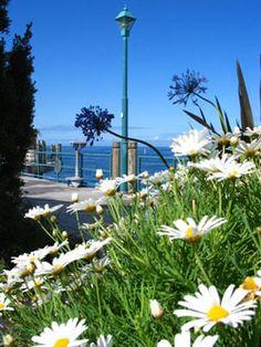 Beach Daisies Fragrance Oil  #fragranceoil #fragranceoils #fragrance
