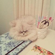 Cloud!!!!he's so cuteeee!!!!#PatandJenforever!