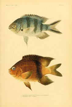 The fishes of Samoa. - Biodiversity Heritage Library