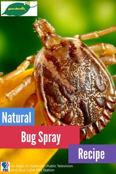 Natural bug spray recipes that get the job done without dangerous chemical pesticides.