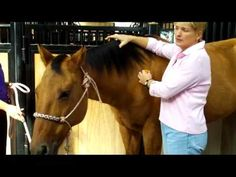 April has put this yoga for horses video together so more horse owners will get involved with understanding how their horse should be able to move-done daily you will have a different horse in just 30 days. A much more fluid horse-wore willing to give to bit-leg-reign. Equine Integrative Therapies  http://www.HolisticHorseWorks.com  Want to lear...