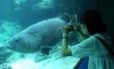 ミーバイ 美ら海 - Google 検索