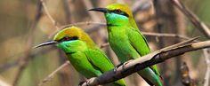 8 Days Guwahati Shillong Kaziranga Tour Packages @ Best Price Brahmaputra River, Forest Resort, Shillong, Northeast India, Rare Birds, 8 Days, Colorful Birds, Bird Species, Day Tours