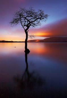 Solitary trees, if at all, grow strong. Winston Churchill