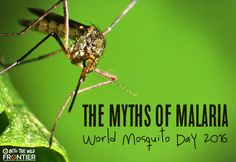 The Myths of Malaria: World Mosquito Day | www.frontiergap.com…