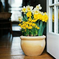 Learn how to plant bulbs in pots in the fall for gorgeous blooms in the spring.