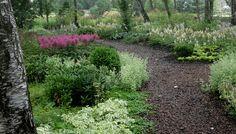 Ландшафтный дизайн: фото деревьев и кустарников в саду, композиции из деревьев и кустарников