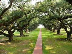 Oak Alley Plantation; looking towards the Mississippi from the 2nd story balcony