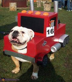 Derrick: This is my bulldog Tucker in his Mack Truck costume.