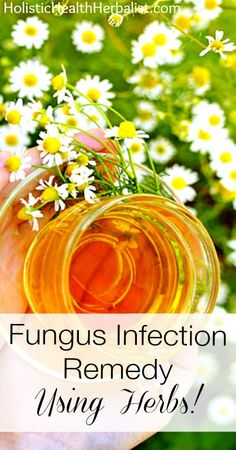 Fungus Infection Remedy- Using Herbs! http://www.holistichealthherbalist.com/fungus-infection-remedy-using-herbs/